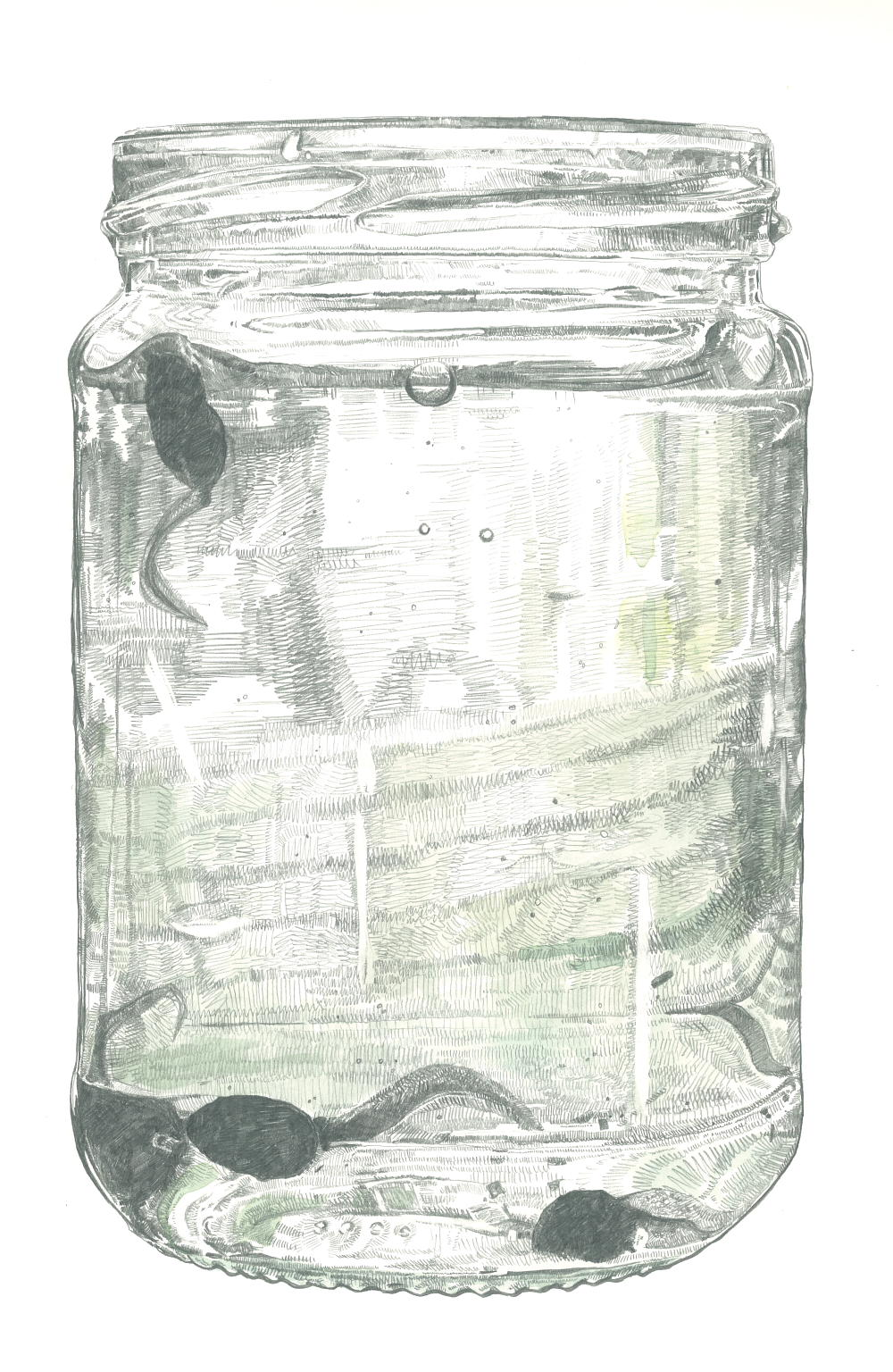 Tadpoles in a Jar (resized)