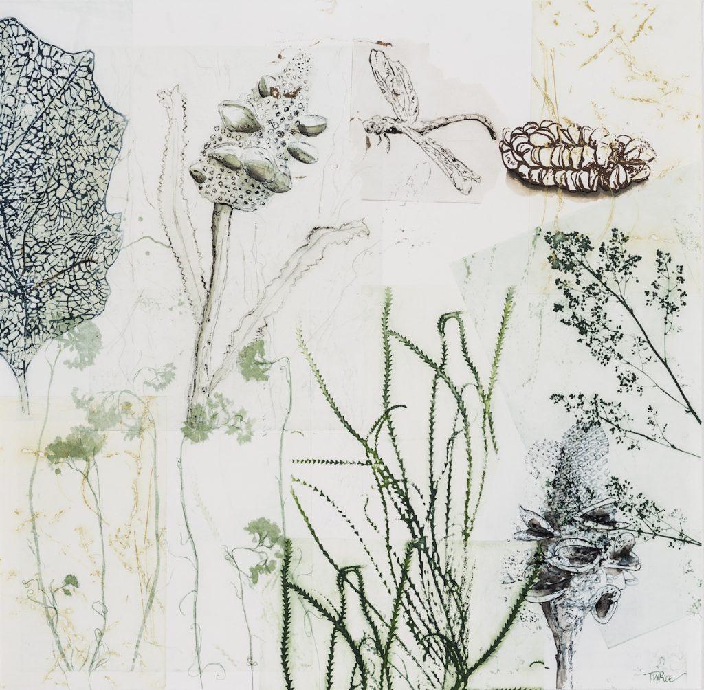 Trudy Rice DRAGONS & BANKSIAS SERIES Banksias, Dragon & Blue Skeleton Leaf 50cm x 50cm