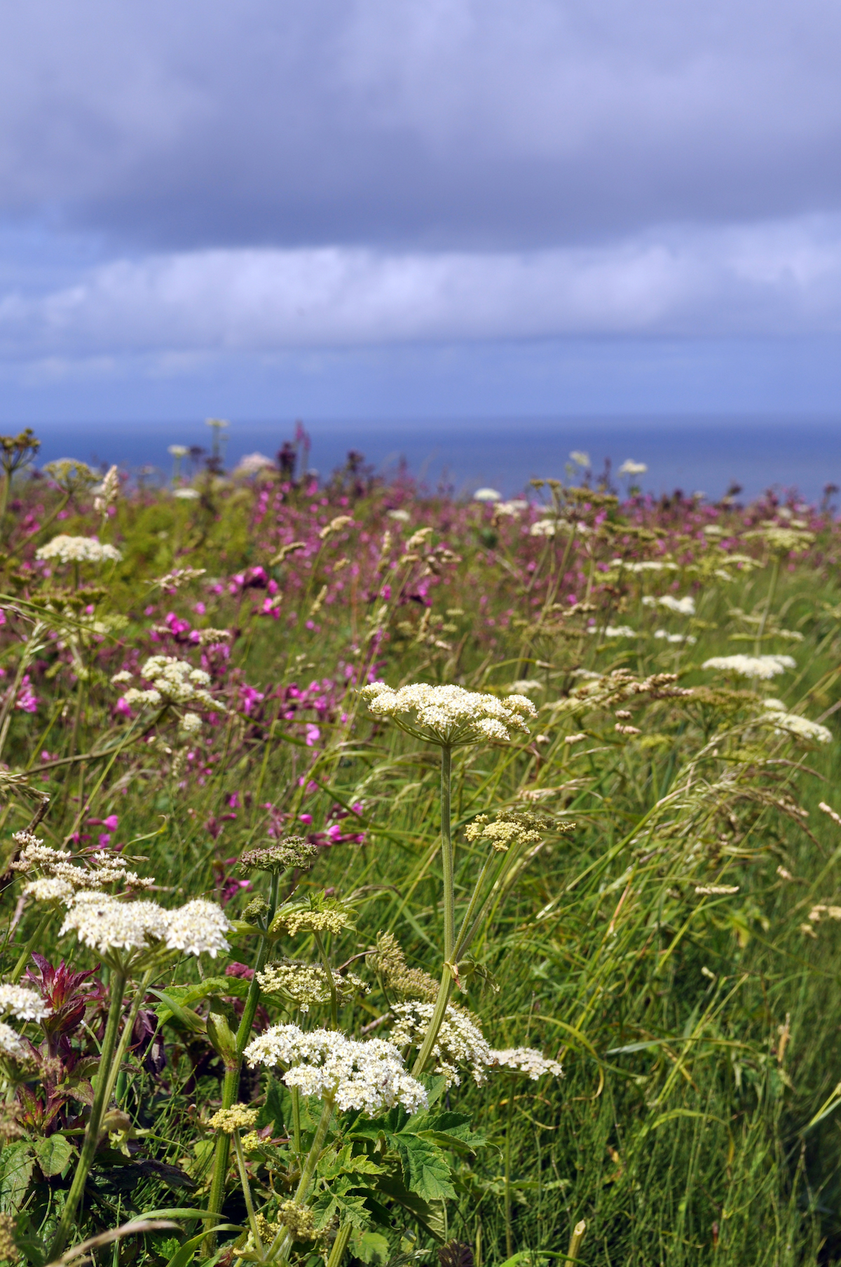 6. Cornish hedgerow in June 2