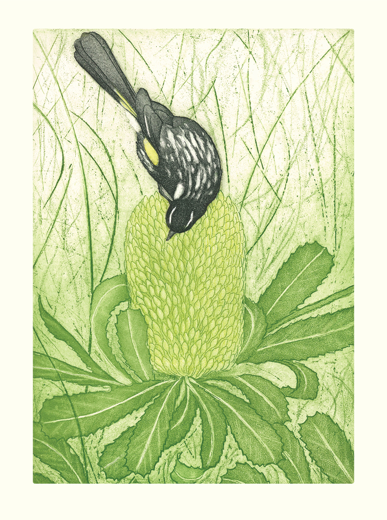 Honey-eater-site-card