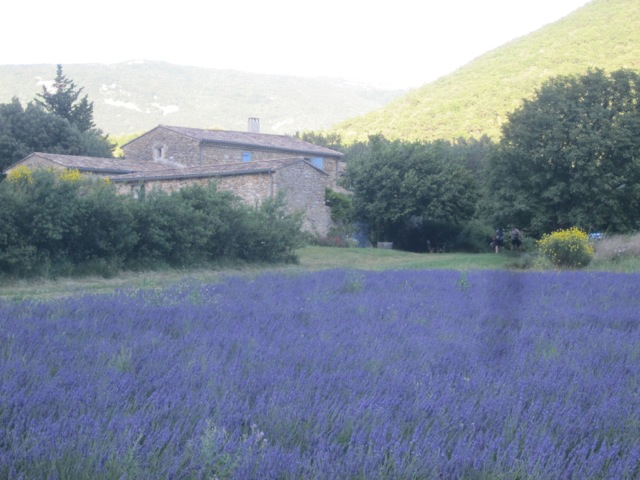Where we stay on the lavender farm in the Drome [June 2012]
