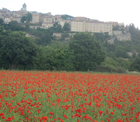 Poppies at Sault, Provence
