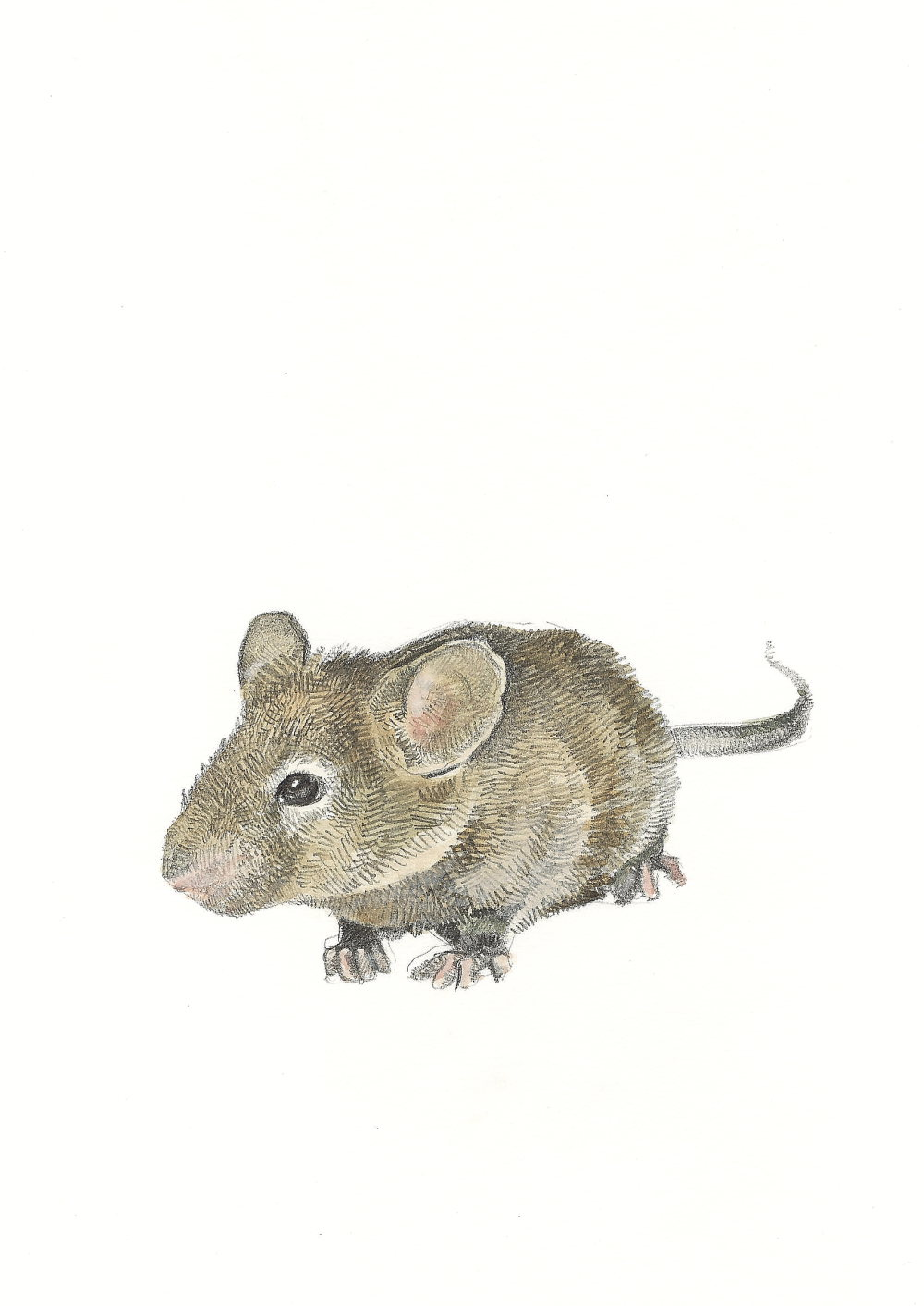 Field Mouse (resized)