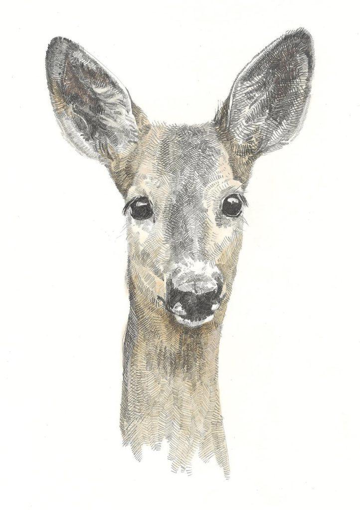 Roe Deer (resized)
