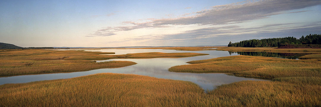 Salt Water Marsh - Harvey Bank