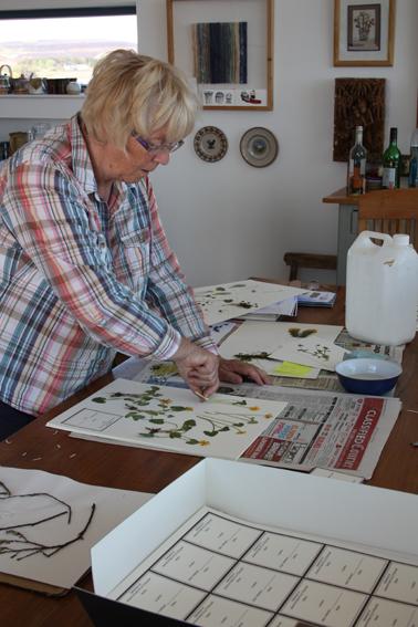 1 June 3rd 2013 herbarium opt