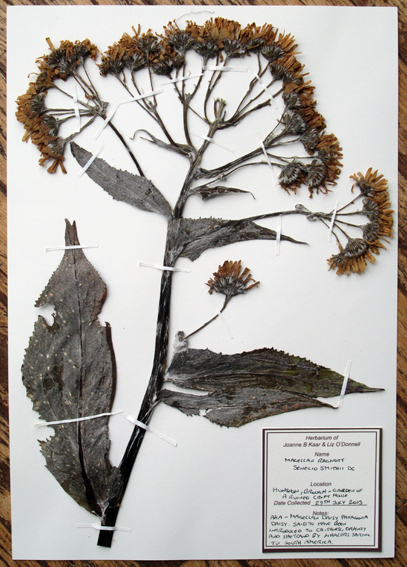 5 pressed herbarium 31st August 2013 opt